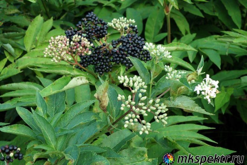 b_0_0_0_10_images_stories_103377_8c34c9a81.jpg