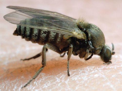 Подробнее: Гнус под прицелом: насекомые и методы борьбы